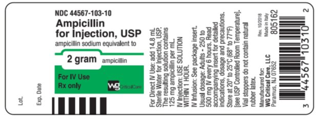 Ampicillin 2 gram vial label