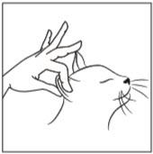 Diagram Step 3