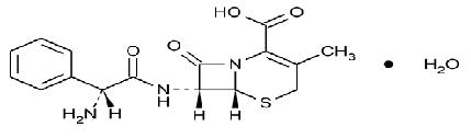 cephalexin-str