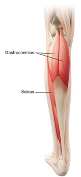 Figure_4_Muscles_Lower_Limb_Spasticity_Pediatric