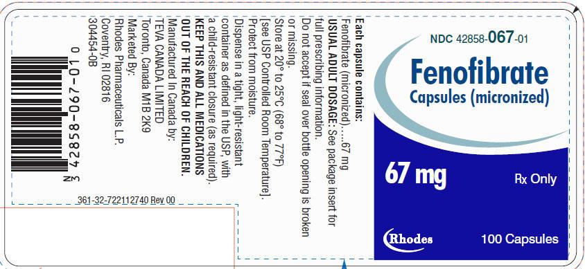 Fenofibrate Capsules [micronized] 67 mg, 100s Label