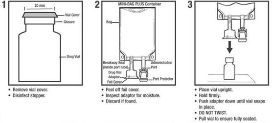 Representative image of Figure 1-3