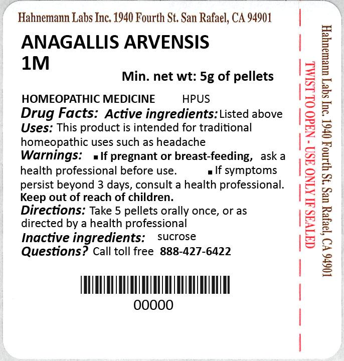 Anagallis Arvensis 1M 5g
