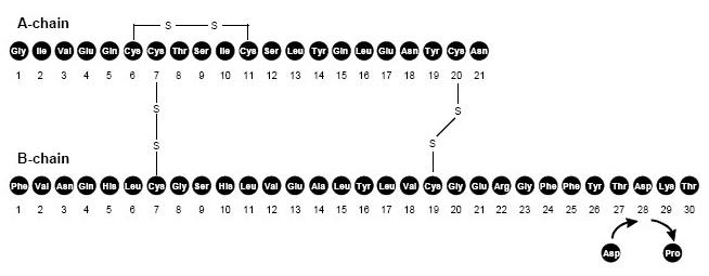 Fig. 1 - Structural Formula of Insulin Aspart